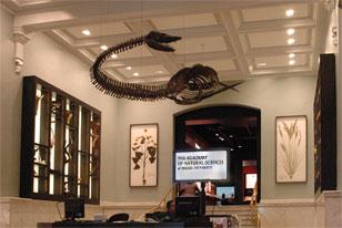 Elasmosaurus Skeleton Admission - The Academ...