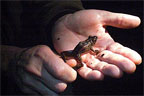 Voices of the Night participant holds small frog