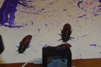 Bug Painting