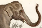 detail of elephant print
