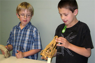 two boys looking at a komodo dragon skull