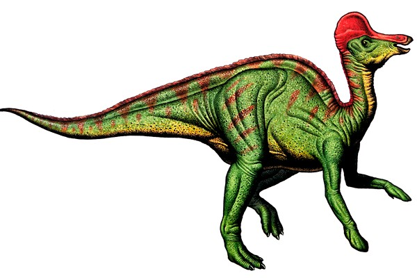 Corythosaurus illustration by Robert F. Walters