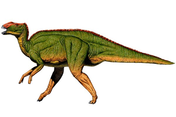 Hadrosaurus illustration by Robert F. Walters