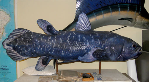 the cast of the coelacanth