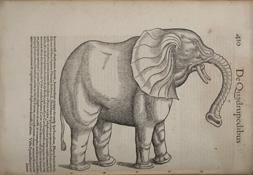 antique illustration of an elephant