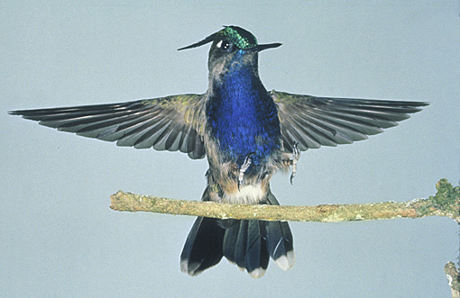 high speed photograph of a hummingbird
