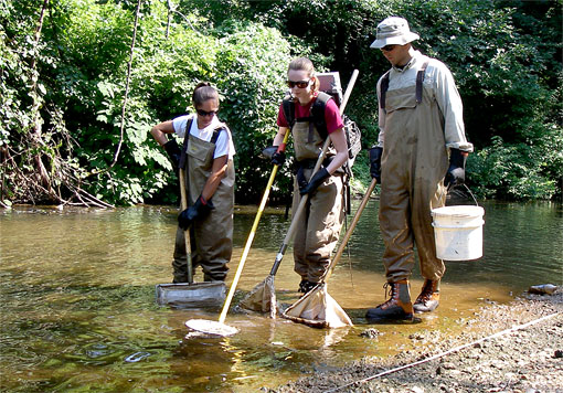 photo of electrofishing in a stream