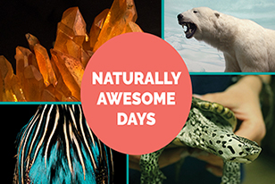 naturally awesome days - minerals, polar bear, turtle