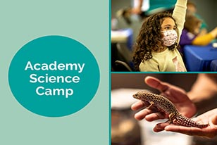 academy science camp girl with mask raising hand and leopard gecko