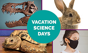 vacation science days collage of dino skull turtle rabbit child with mask