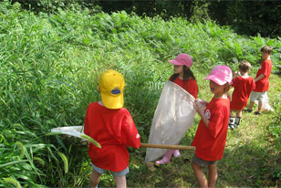 summer campers hunting for insects