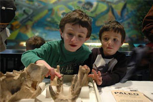 two boys check out some fossil specimens at Paleopalooza
