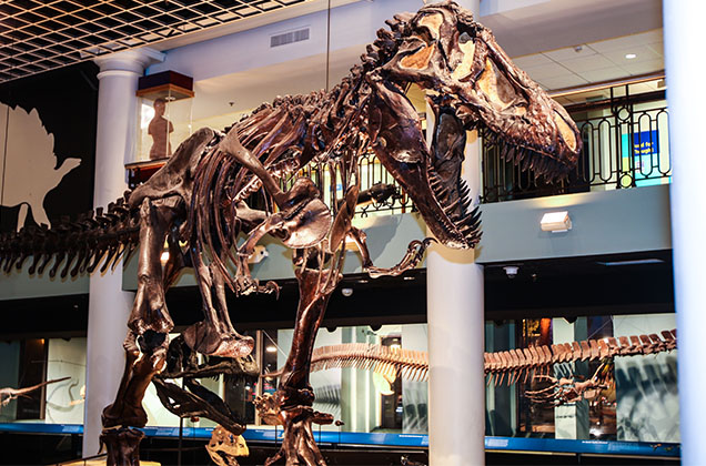 Explore Dinosaur Hall and other exhibits with free general admission