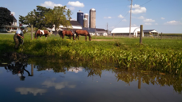 Pond with horses
