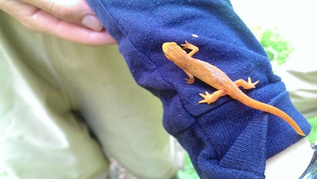 Olimpias Summer Project 2013: Salamander