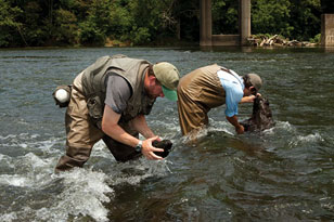 Will Bouchard and Sylvian Klein collecting macroinvertebrates in the Holston