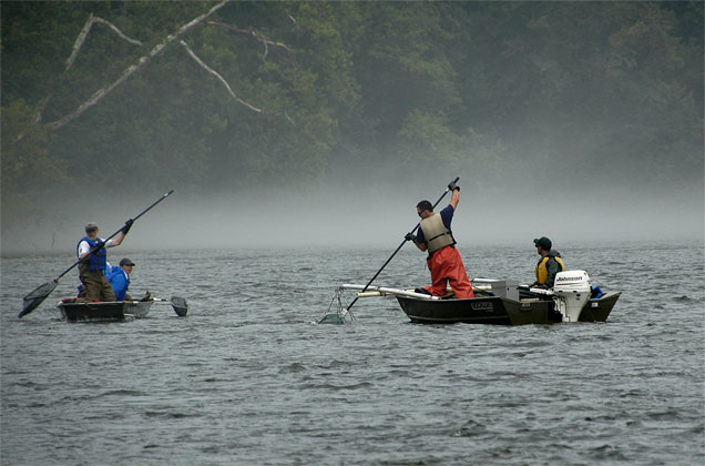 patrick center fisheries biologists in two electroshocking boats collecting fish in the Holston River