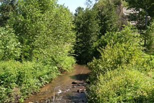 partially restored headwater stream in Pennsylvania