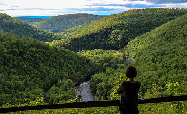 loyalsock canyon vista by mike servedio