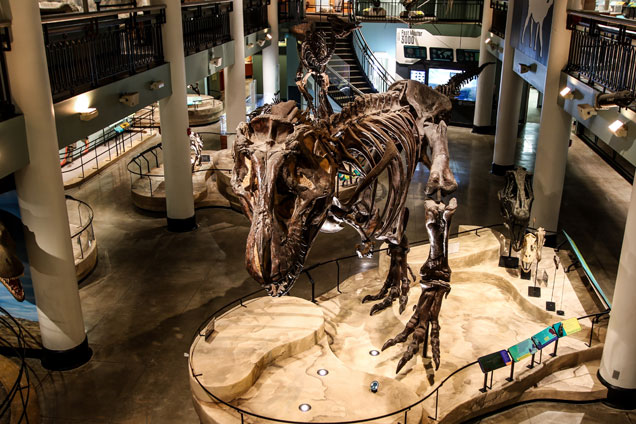 dinosaur hall at the Academy of Natural Sciences