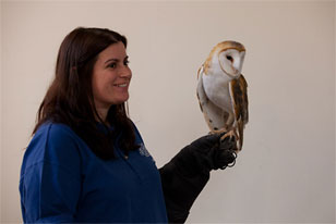 Teacher-naturalist with a barn owl
