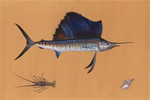 atlantic sailfish painting by James Prosek