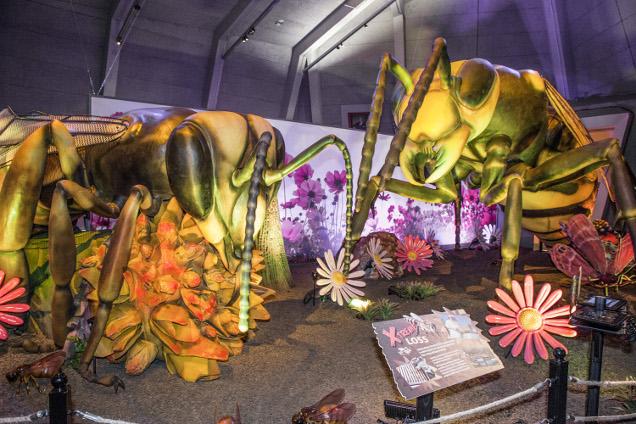 Xtreme Bugs Exhibit