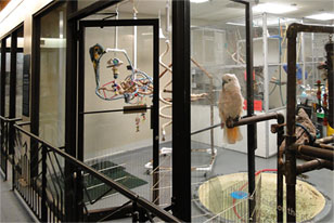 view into the Live Animal Center showing two birds