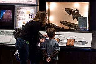 mother and son looking at reconstruction of the fossil Tikaalik in Science at the Academy