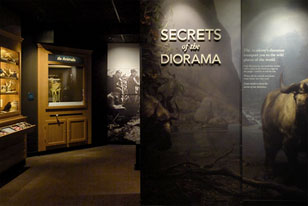 diorama parts, videos and a taxidermied gazelle in 'Secrets of the Diorama'