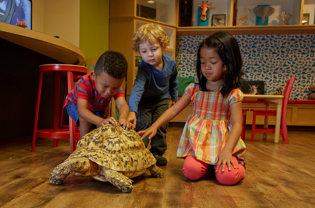 kids play with tortoise
