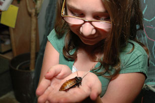 girl calmly holding a Madagascar Hissing Coackroach in Outside In