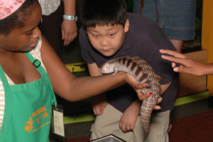 Boy getting a very close look at a large lizard held by a volunteer in Outside In