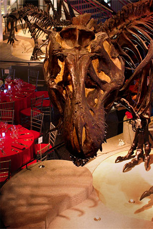 Tyrannosaurus skeleton looming over place settings in Dinosaur Hall