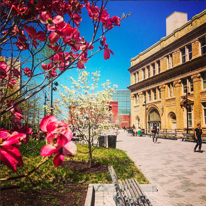 Spring on Drexel University's Campus